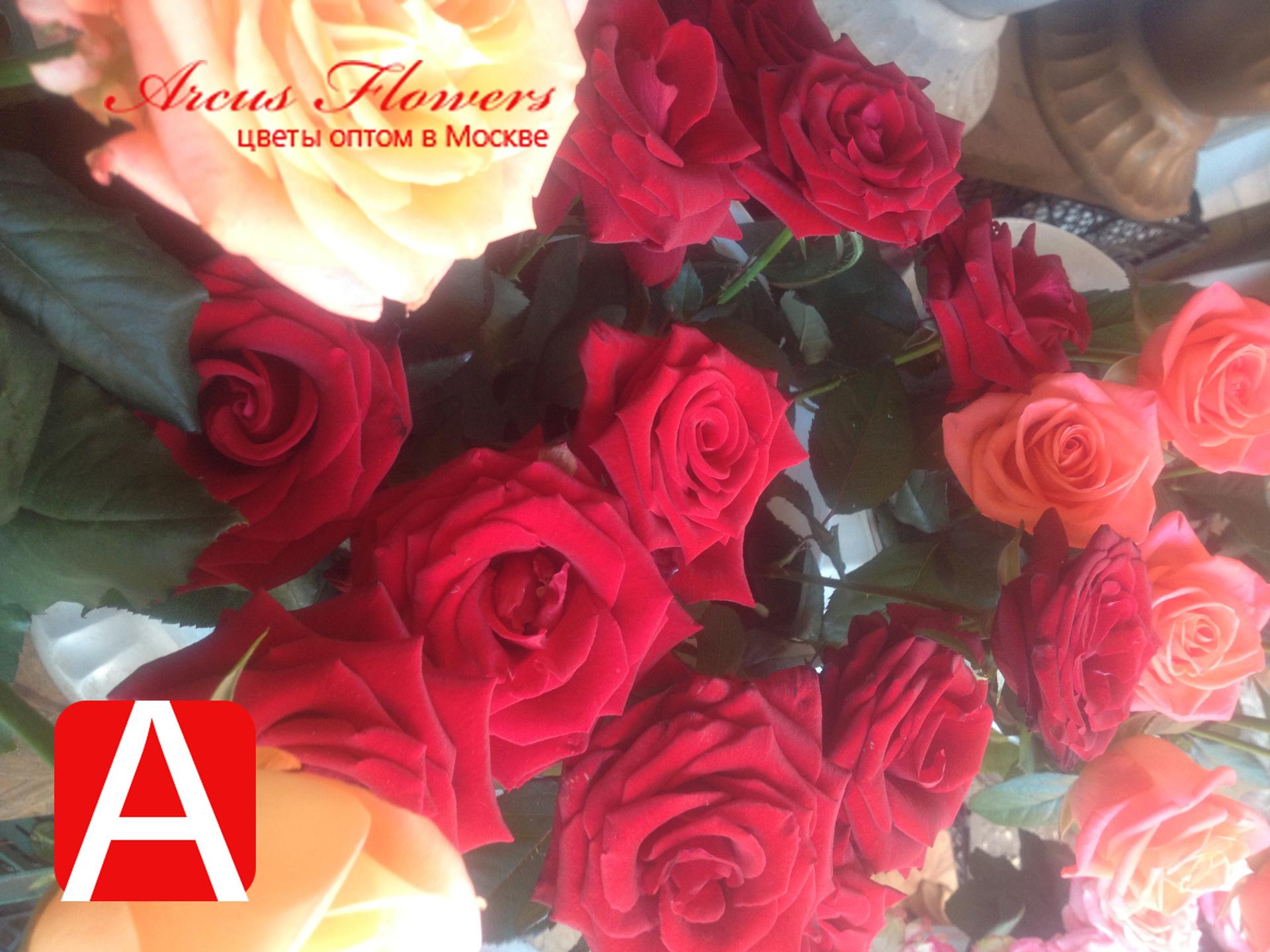 Купить розы оптом